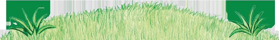 Grassy Bottom